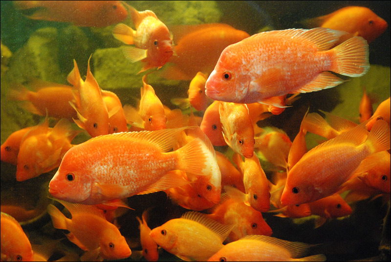 аквариум в Алуште