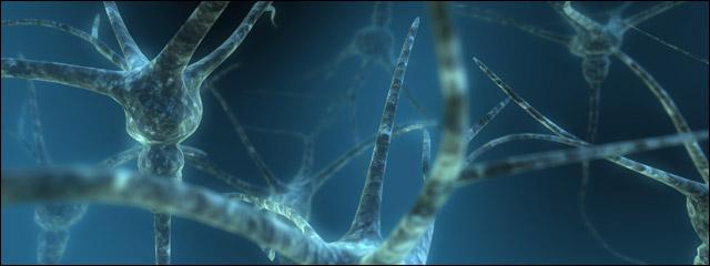 мозг, нейроны