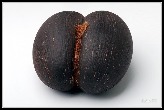 coco de mer (морской кокос)